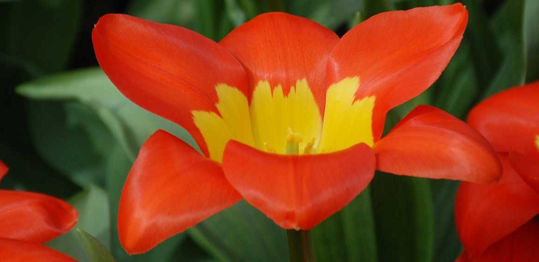 AnniesShop-flowerbanner-1